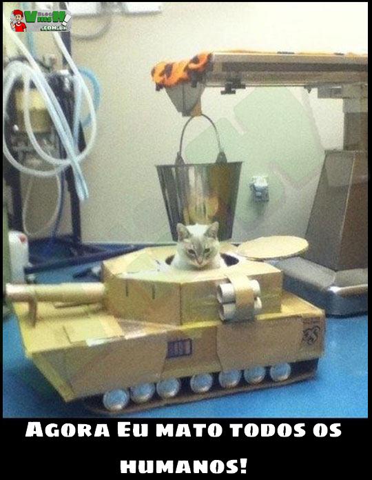 Blog Viiish - Olha a cara desse gato num tanque