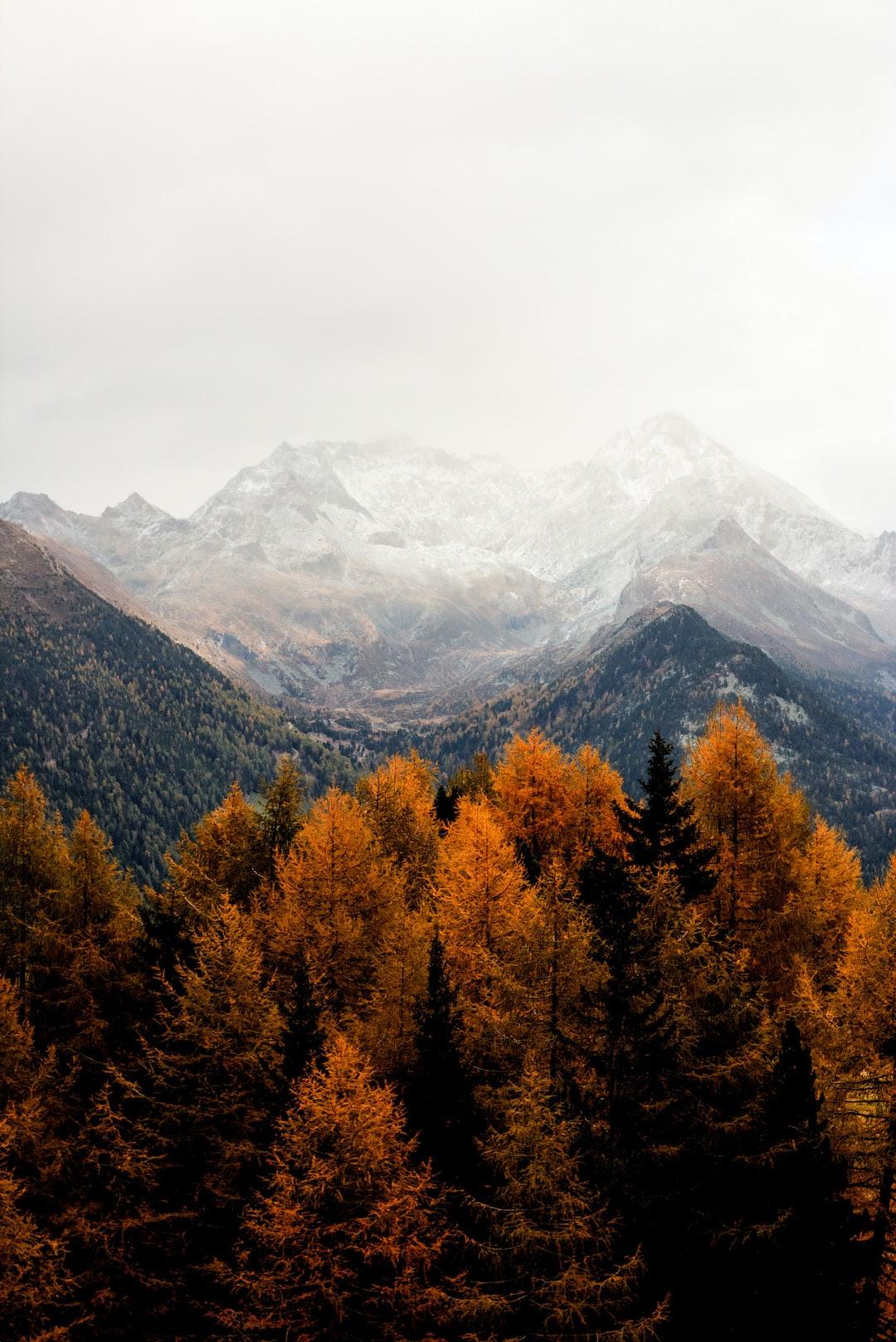 Wallpaper Nature Fall