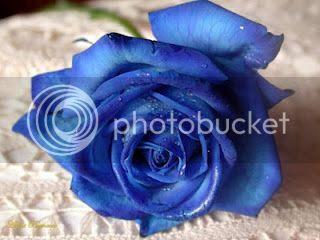 photo blue rosa blu angelo angioletto celeste uccellino blu celeste azzurro fragola blu