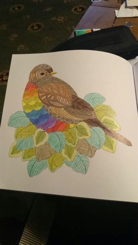 millie marotta animal kingdom bird   leafy nest