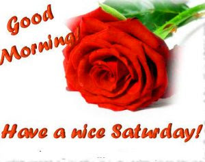 Saturday Good Morning Images Photo Pictures With Red Rose