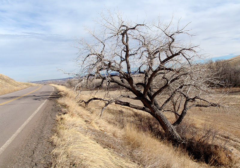 This is my favorite cottonwood on this route.  In the summer, its shade is oh so inviting.