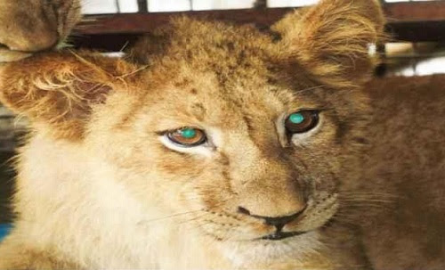 A Sneak Peek Inside Ex President, Olusegun Obasanjo's Growing 'Jungle' of Animals