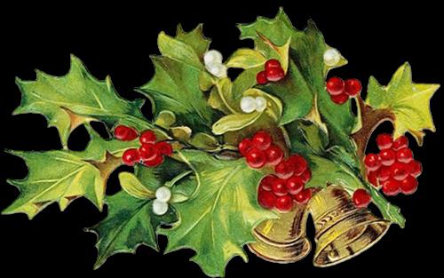 Houx Gui / Noel