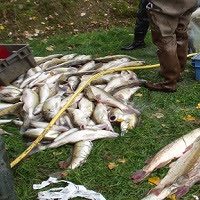 Contre l'installation d'un pêcheur professionnel dans l'Yonne !