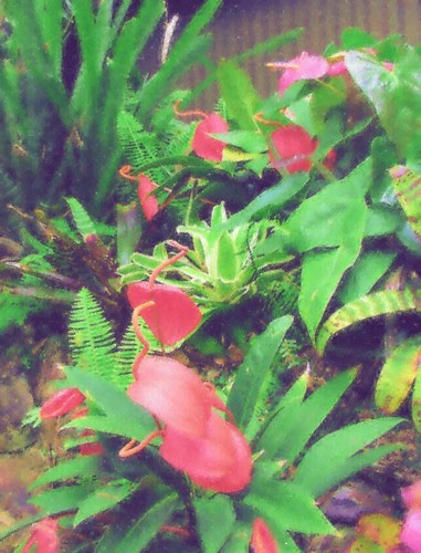 flamingo lillies web