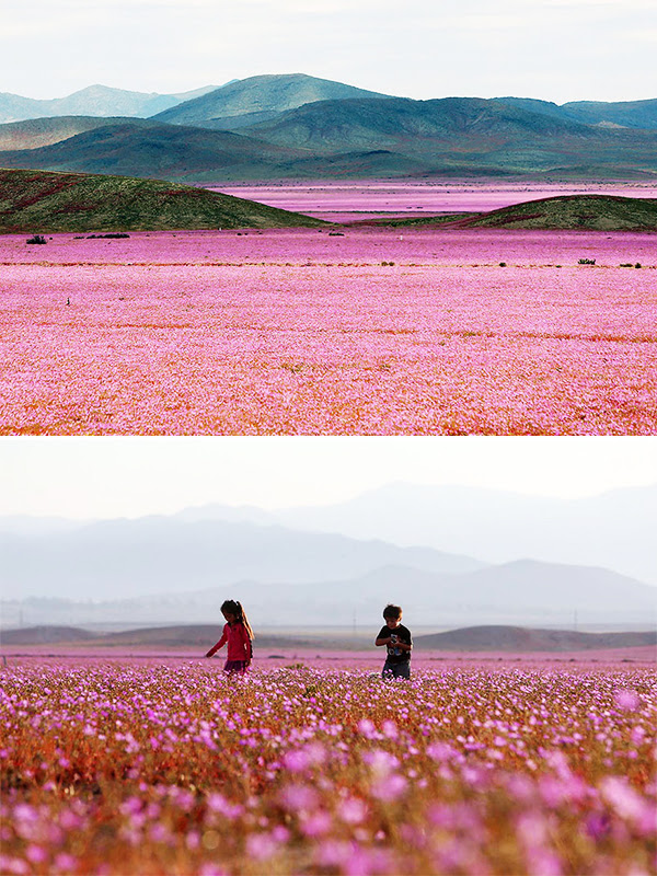 The Atacama Desert in Chile