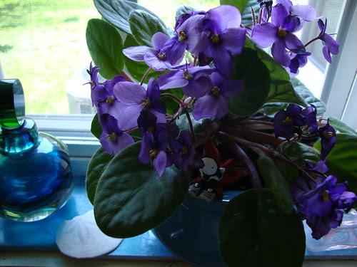 reading poppet in violet 2