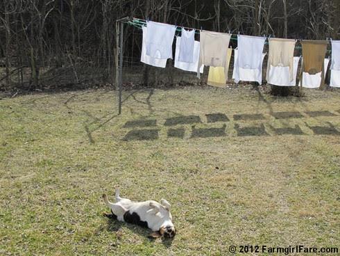 Laundry line shadows 2 - FarmgirlFare.com