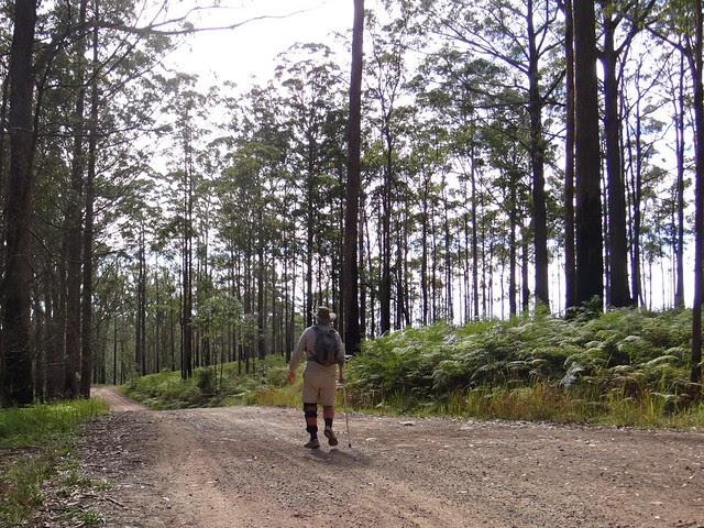 Brandons Road, Bellthorpe Forest