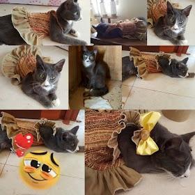 Baju Kucing Lucu Jantan