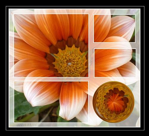 Flower Pane