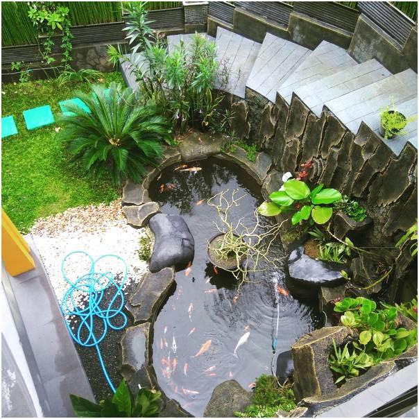 Desain Taman Dan Kolam Ikan Tentang Kolam Kandang Ternak