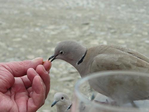 pour les oiseaux la fête n'est pas tout à fait finie by Claudie K