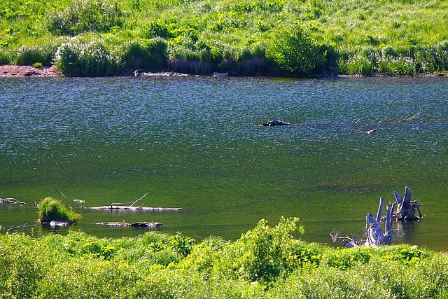 IMG_5290 Moose Pond