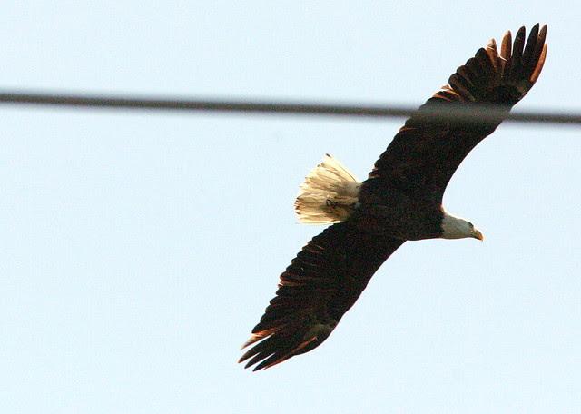 EagleNearWire20090204
