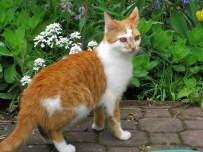 40 Katzenbilder Zum Ausdrucken - Besten Bilder von ...