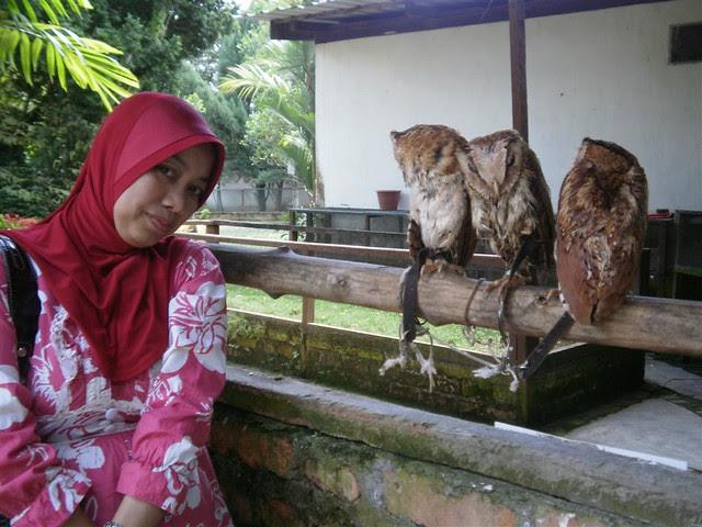 Penang Bird Park 014 (Large)