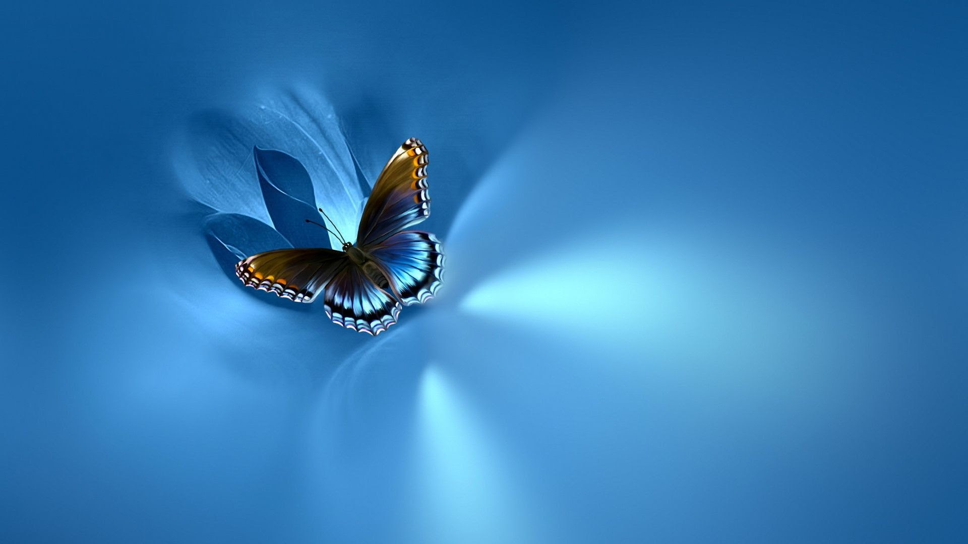 Butterfly Wallpapers Images (71+ background pictures)