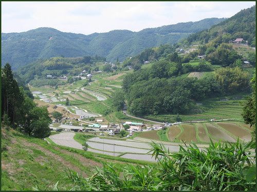 15 terraced rice fields festival  END