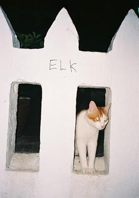 Elk Zine