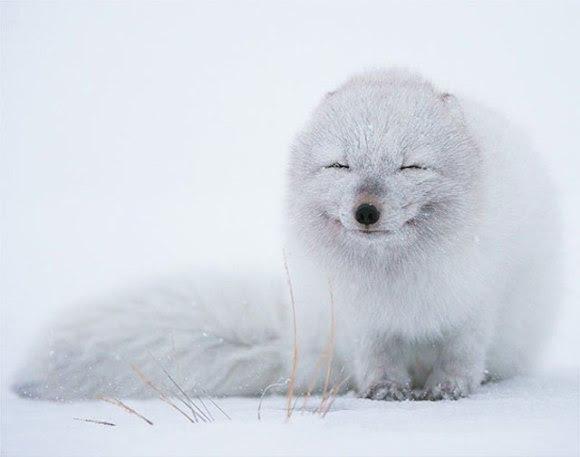 cute-smiling-animals-7