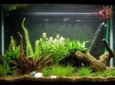Fish Tank Decor on Pinterest