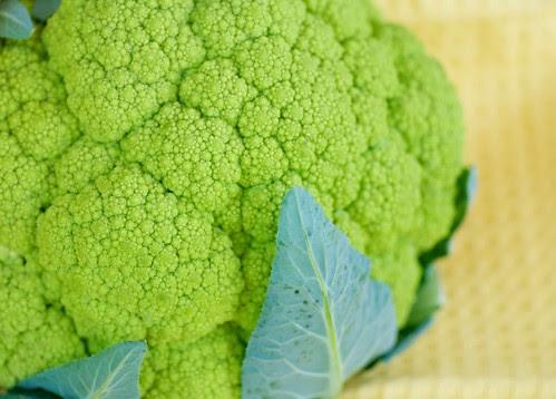 green cauliflower or broccoflower  DSC_0001