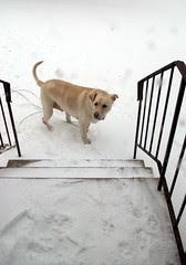 Zeus_snow_122710