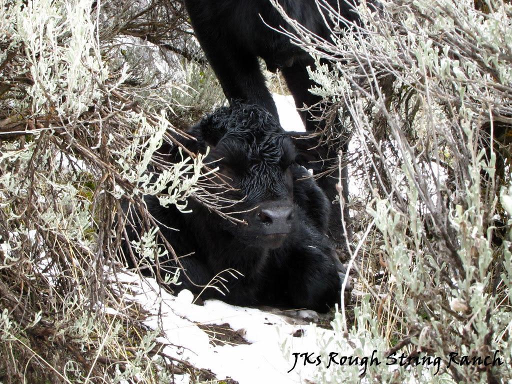 Hidin' in the Sagebrush