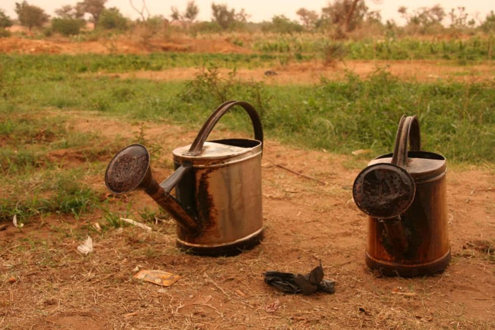 Un proyecto de la cooperación española en Níger promueve la gestión agrícola y uso eficiente del agua.