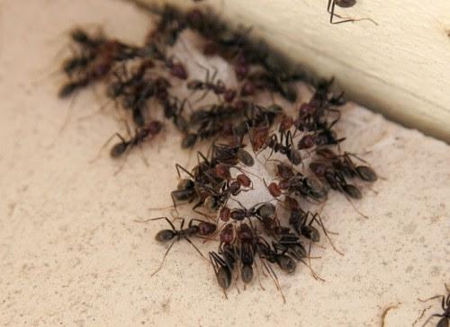 τα-μυρμήγκια-ο-νέος-σύμμαχος-για-την-καταπολέμηση-της-κλιματικής-αλλαγής