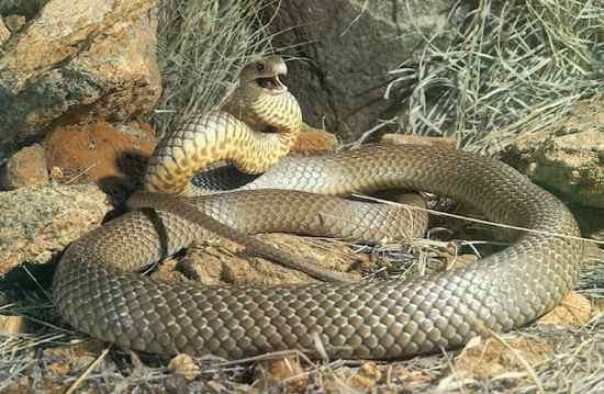 eastern-brown-snake-reef-lodge-townsville-backpackers
