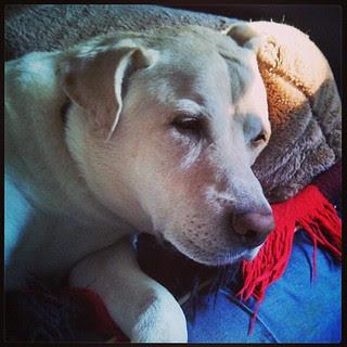 Good Monday Morning! #happydog #sunspot #dogstagram #love