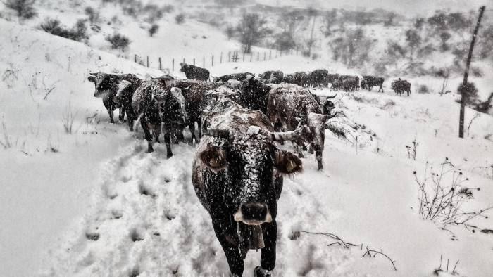 Risultati immagini per gelo ed effetto serra