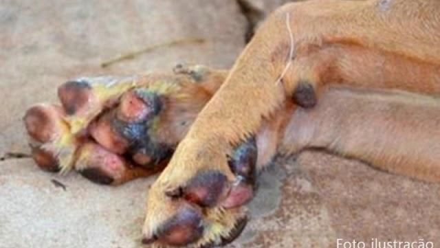 CRUELDADE: Homem mata o seu próprio cachorro a facadas