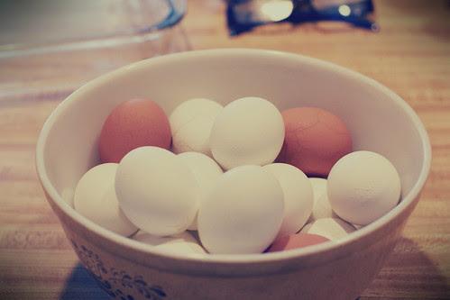 eggs shells