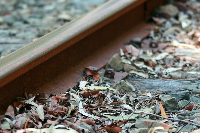 Tram Rail and Leaves