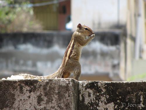 Action squirrel