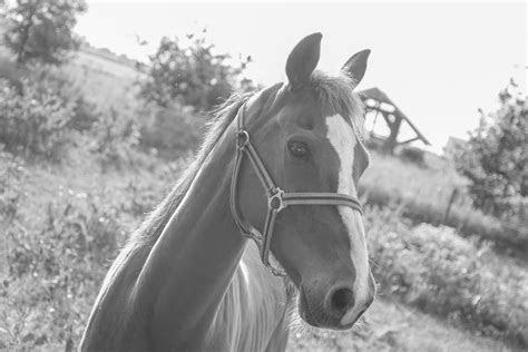 close  photography  gray  white horse  stock