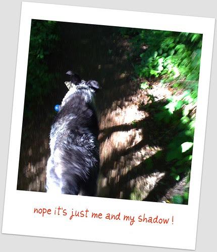 shadow walk 4
