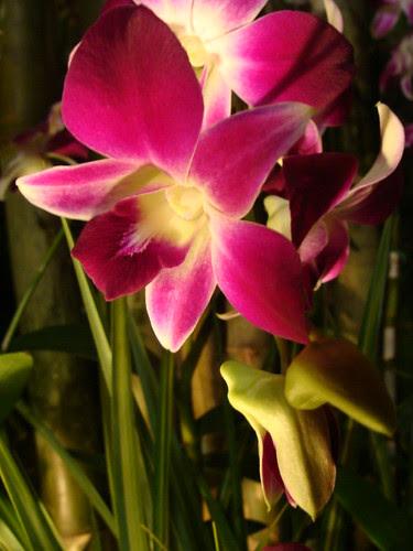 Feria de Flores Med_ 09 by [j]tOy_
