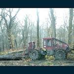 Jura - Bresse et sa région | Forêt : 27 hectares sont à renouveler