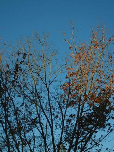 DSCN7288 - Fall Leaves