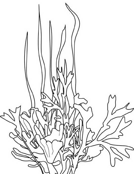 Coralli Marini Disegni Tavolo Consolle Allungabile