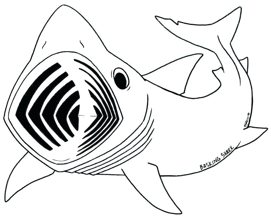 Megalodon Coloring Page at GetColorings.com | Free ...