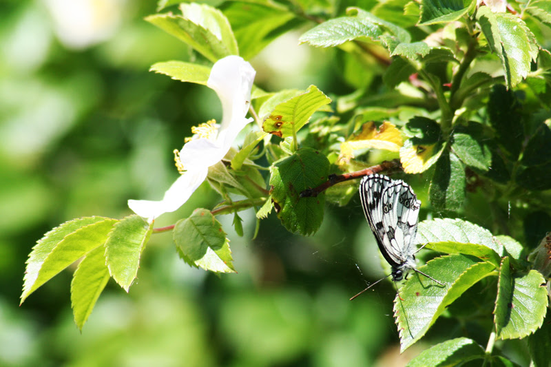fioritura 2011_17