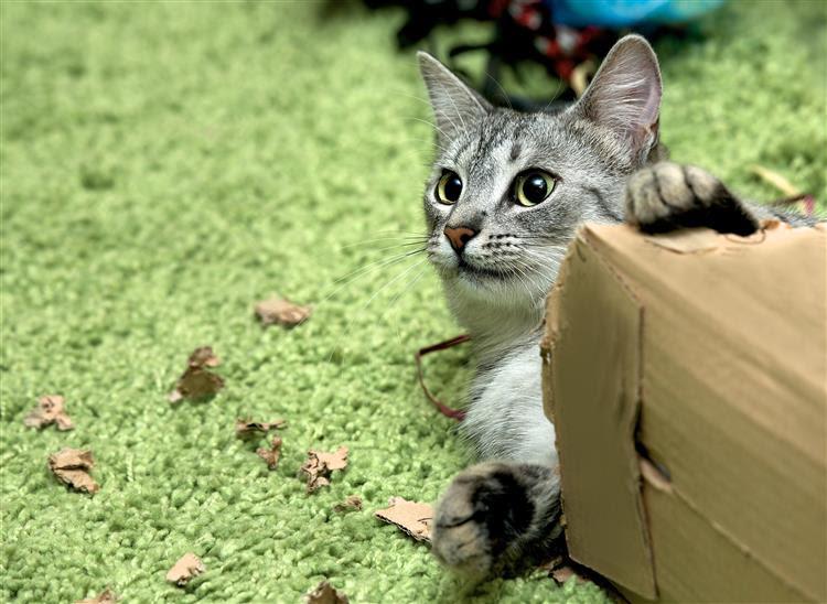 Gatos: De sagrados a  amaldiçoados