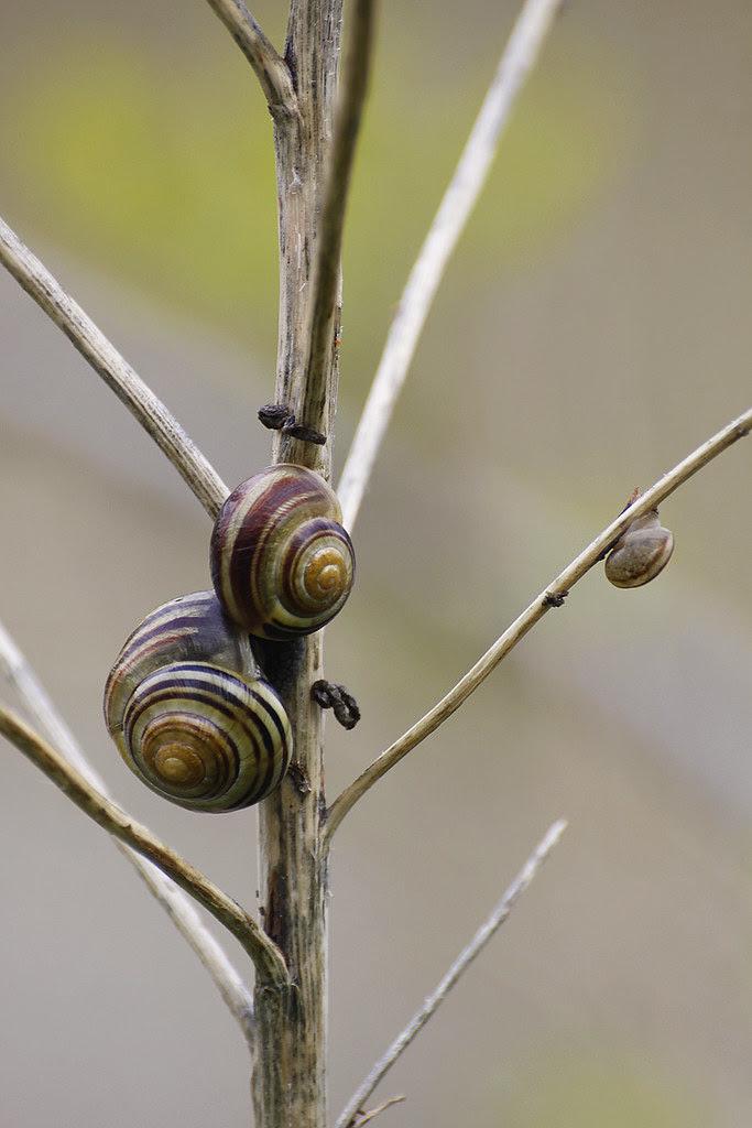 treesnails.2