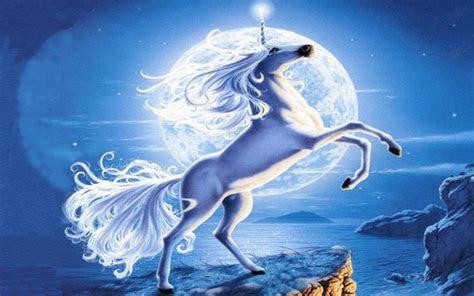 adorable unicorn full moon wallpapers adorable unicorn